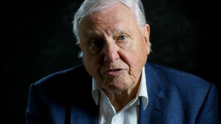 The Time When Sir David Attenborough Helped Solve A Murder