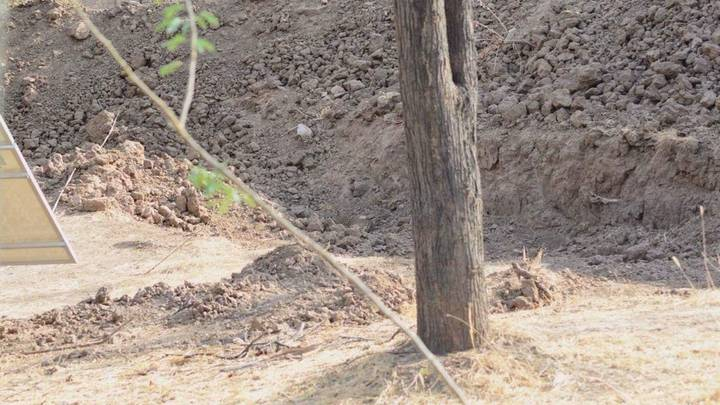 The Viral Picture Of Leopard Hiding In Ditch Which Baffled The Internet