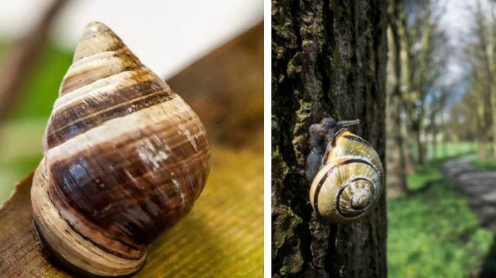 George The Lonely Snail Has Died And Now His Species Is Extinct