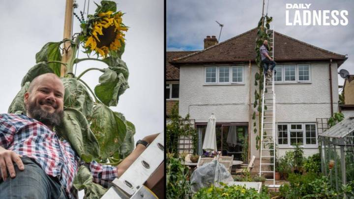 Dad Grows 20ft Sunflower After Four-Year-Old Son Asks For One 'As Tall As The House'