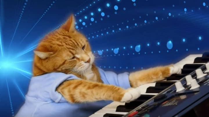 Bento The Keyboard Cat Has Sadly Passed Away