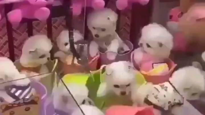 Arcade Claw Grabber Causes Outrage After Using Real Dogs As Prizes