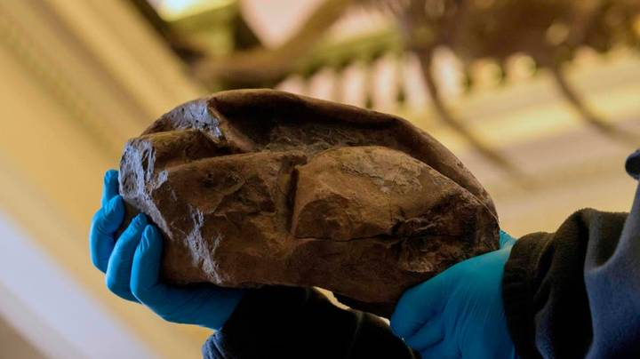 Giant Fossil Found In Antarctica Believed To Be A Mosasaur Egg
