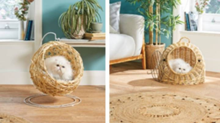 Aldi Is Now Selling Hanging Egg Chairs For Cats