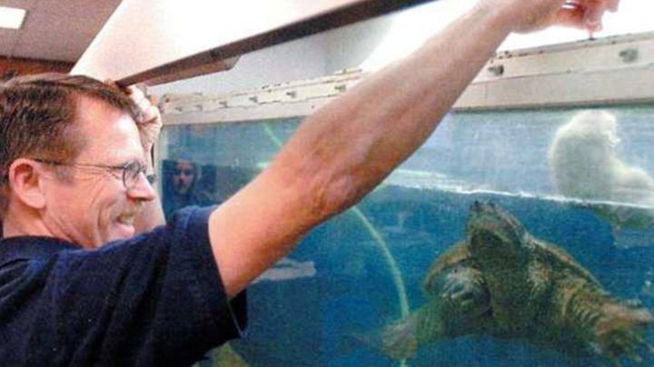 Teacher Who Fed Puppy To Snapping Turtle In Classroom Found Not Guilty Of Animal Cruelty