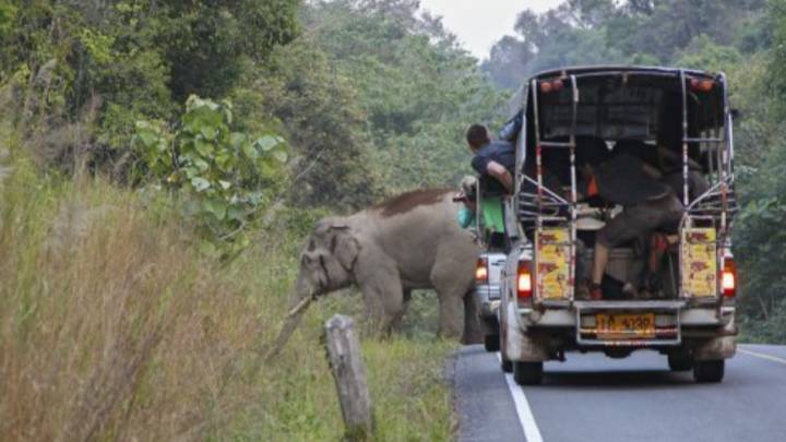 Elephants Reclaim Popular National Park In Thailand Amid Lockdown