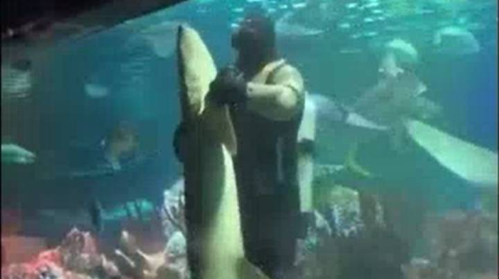 Diver Dances With Huge Shark In Russian Aquarium