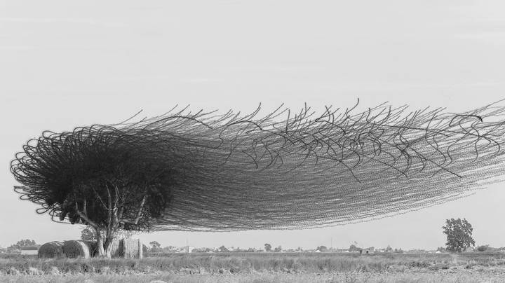 Photographer Wows The Internet By Capturing Flocks Of Birds In Flight