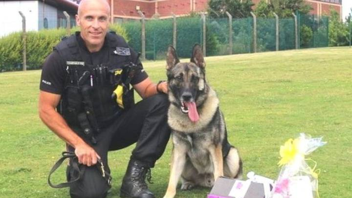Man Who Stabbed Police Dog In The Head Becomes First To Be Jailed Under Finn's Law