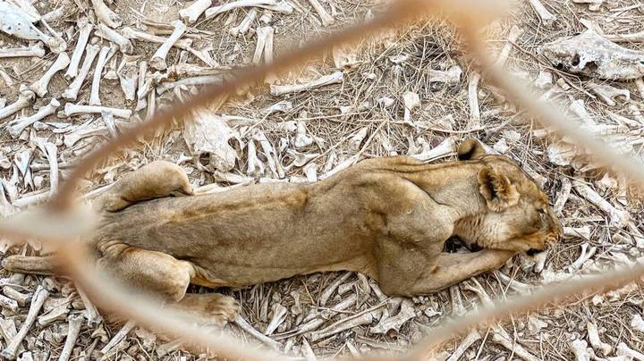 Shocking Images Show Wild Animals Kept In Appalling Conditions In Zoo