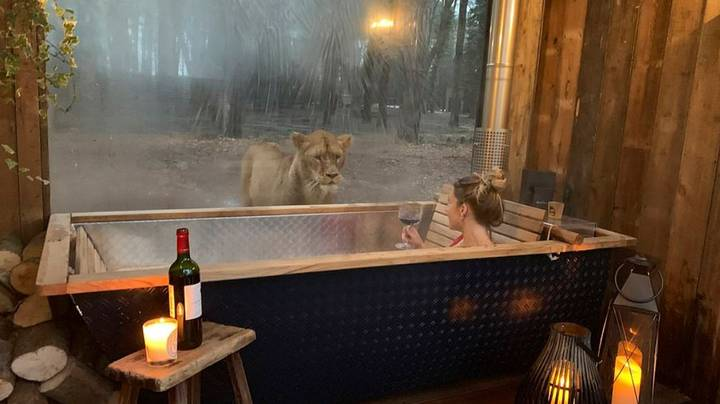 Hotel Offering Guests Opportunity To 'Sleep With Lions'