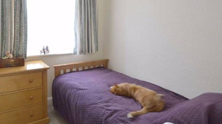 Man Looks Up Neighbour's House And Finds His Own Cat Chilling On The Bed