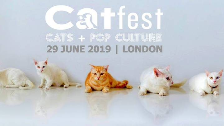 A Festival Dedicated To Cats Is Returning To London In 2019
