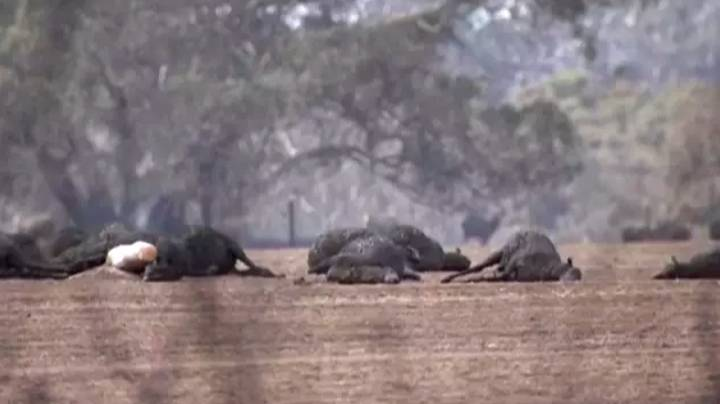 More Than One Billion Animals Now Feared Dead Following Australian Bushfires