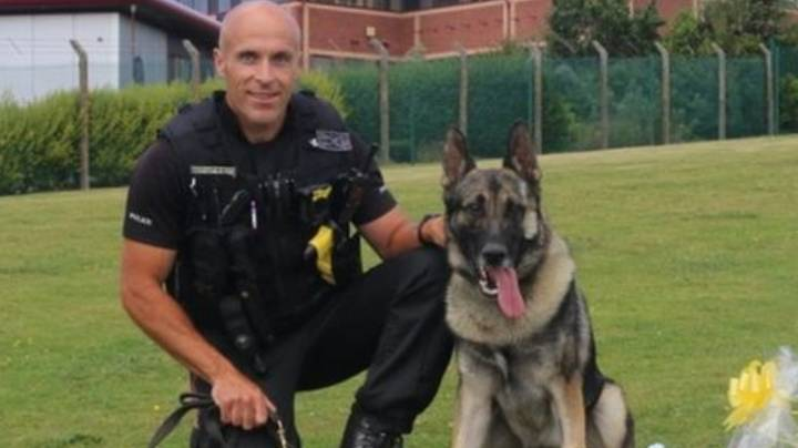 Police Dog Audi Returns To Work After Being Stabbed In The Head