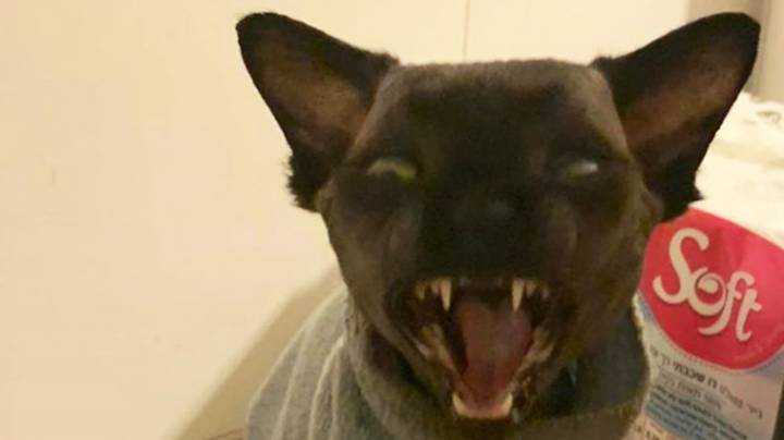 Cat That Looks Like Bat Finds Viral Fame On Instagram