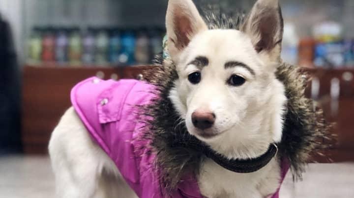Dog With Human-Like Eyebrows Becomes Viral Hit