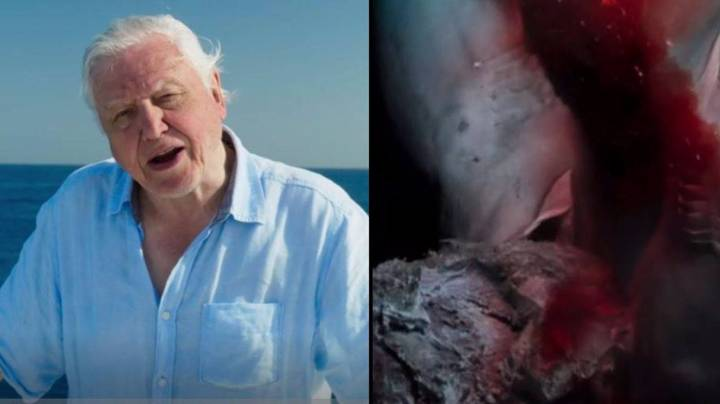 Blue Planet 2 Compared To Horror Movie In Another Breathtaking Episode