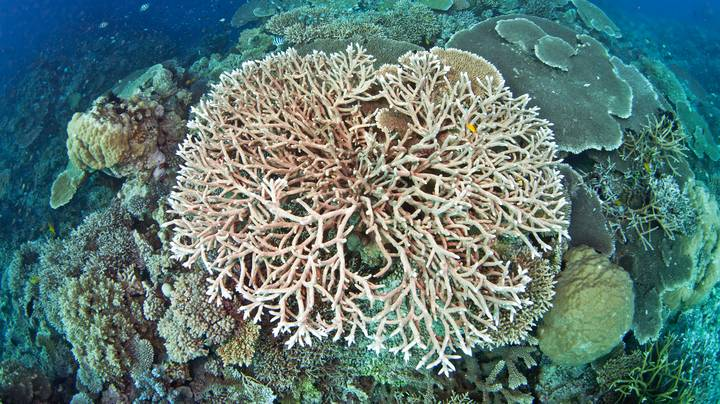 Did You Know There Were Coral Reefs In Ireland?
