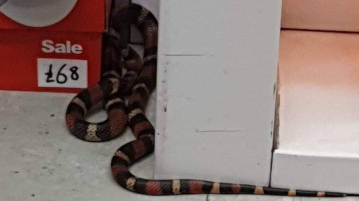 Sports Direct Forced To Close After Snake Found In Store