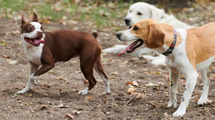 Number Of People Looking At Rehoming Dogs Almost Doubles During Lockdown