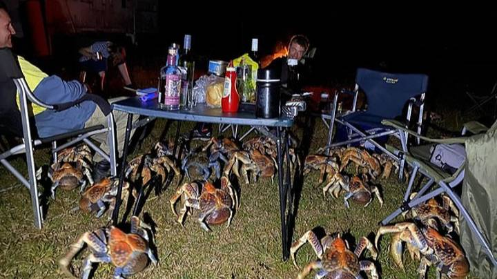 Australian Family's Picnic Invaded By Loads Of Huge Robber Crabs