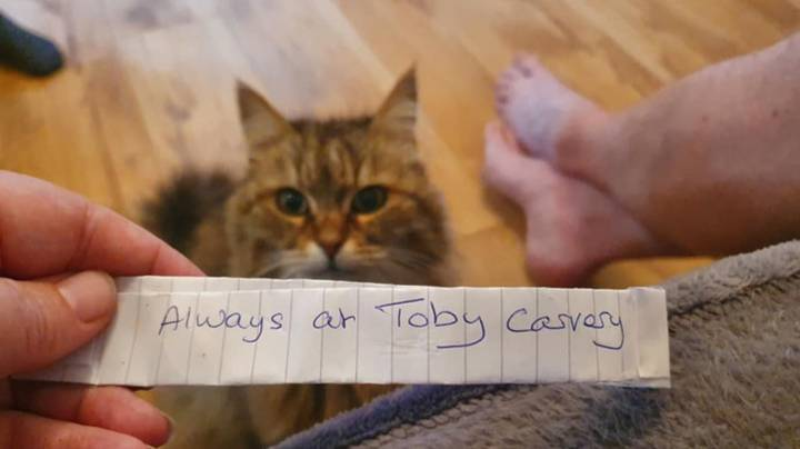 Owner Shocked After Cat Returns Home With Note Saying She's 'Always At Toby Carvery'