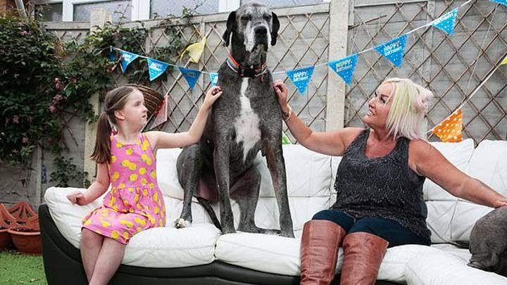 World's Tallest Dog Freddy Has Died Aged 8
