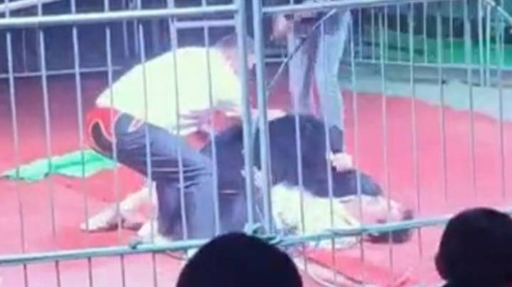 Circus Bear Filmed Trying To Maul Trainer During Performance