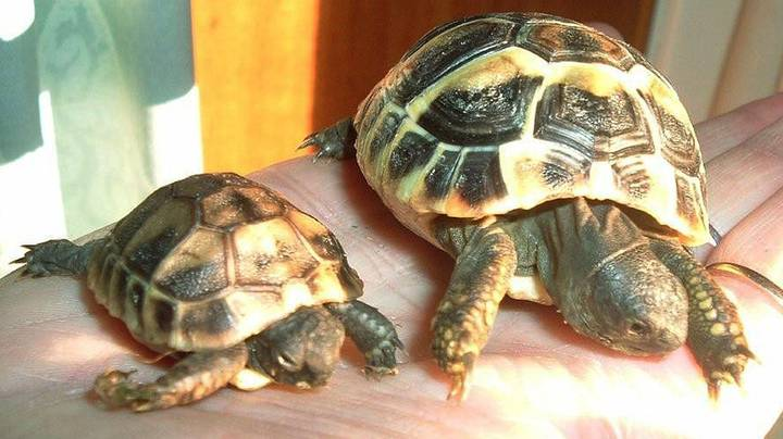 Doctors Find Turtle In Woman's Vagina After She Complains Of Pains