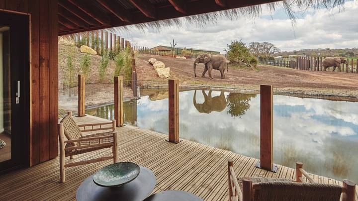 ​UK's First Ever Safari Lodges Where Elephants Roam Next To Rooms Are Officially Open