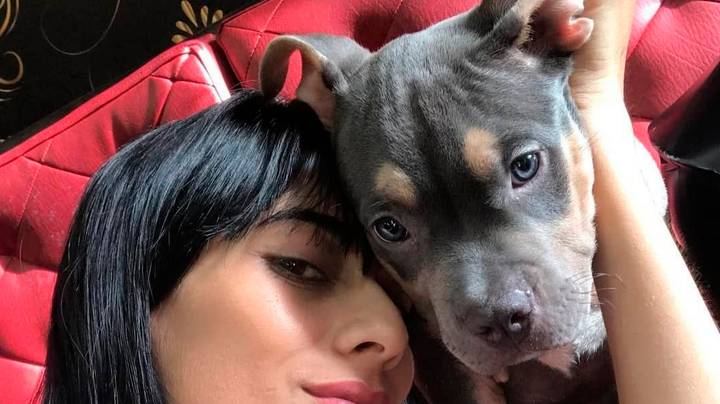 Woman Blames Airline For Dog's Death During Flight