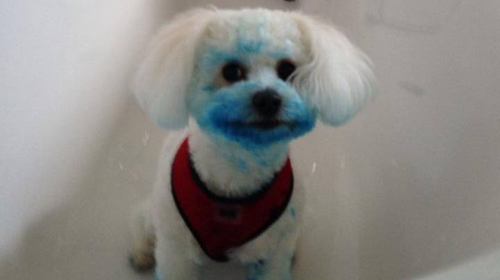 Dog Dyes Herself Bright Blue After Finding Ink Cartridge In The Bin
