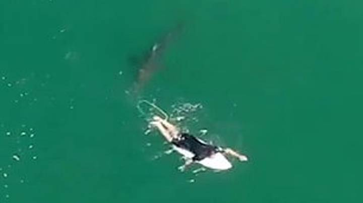 Drone Footage Shows Moment Surfer Is Stalked By Great White Shark