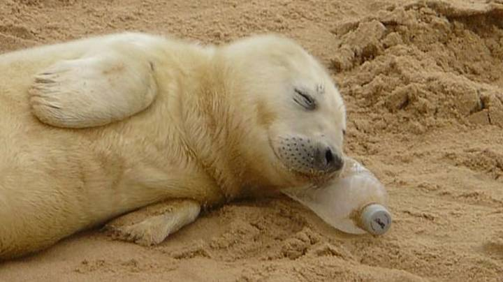 Poignant Picture Captures Seal Pup Sleeping On A Plastic Bottle
