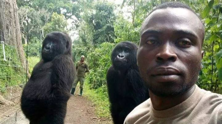 Ranger Whose Gorilla Selfie Went Viral Pays Tribute To Fallen Anti-Poachers