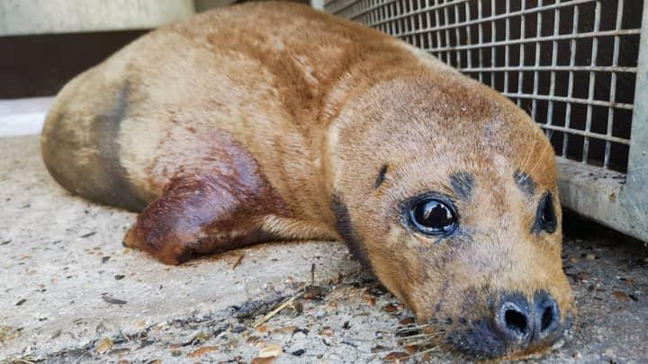 Freddie Mercury The Seal Dies Following Dog Attack