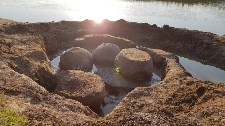 Farmer Discovers Four Giant 'Ancient Armadillo' Glyptodont Shells In Dried-Out Riverbed