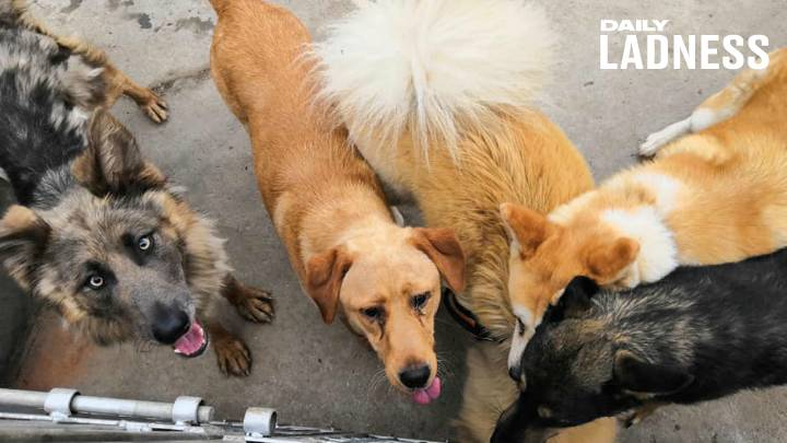 Meet The People Saving Animals From China's Dog Meat Industry