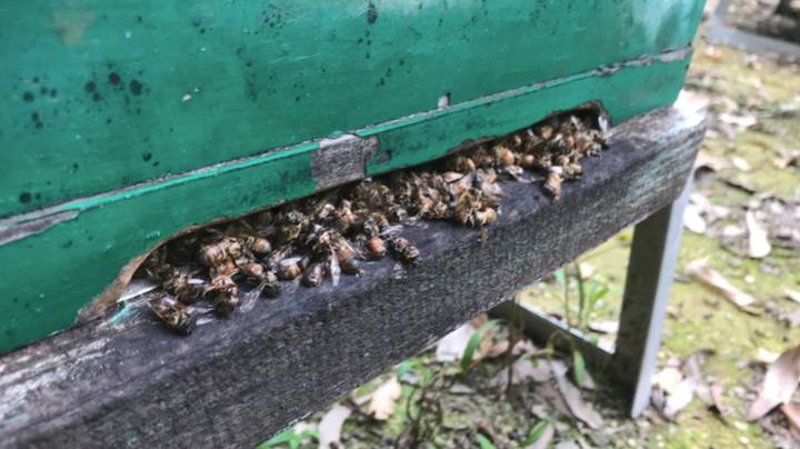 Hundreds Of Thousands Of Bees Have Died In NSW After Someone Doused Beehives In Fuel