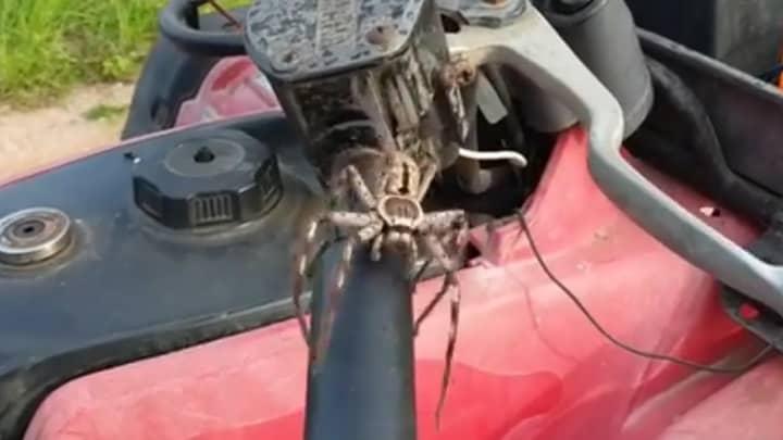 Massive Huntsman Spider Crawls Onto Quad Bike And Leaps At Man