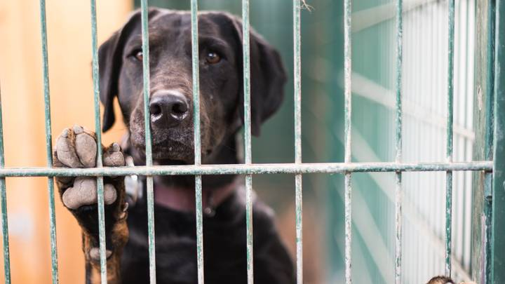 Aussie Animal Shelters Seeing A Spike In Pets Being Abandoned Before Christmas Holidays