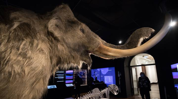 Company With $15 Million Planning To Bring Mammoths Back To Life