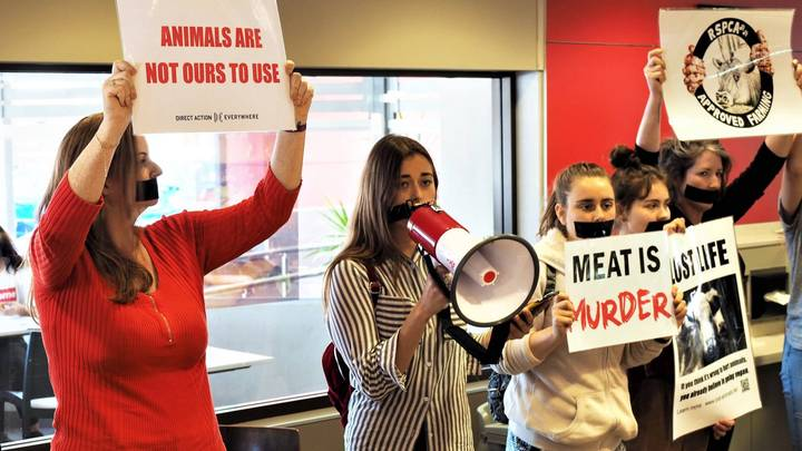 Vegan Manifesto Reveals Activists Want A Constitutional Bill Of Animal Rights By 2055