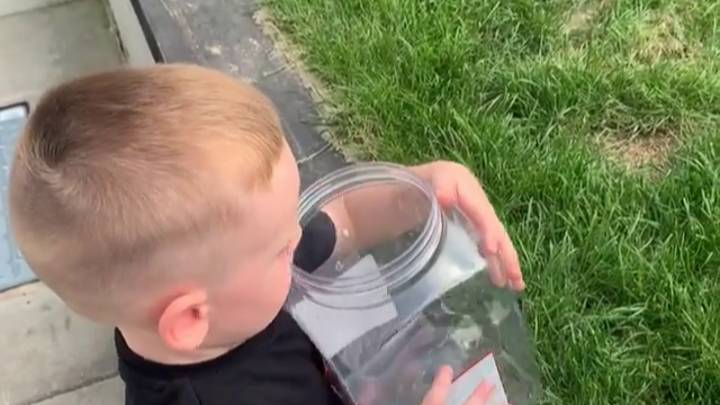 Boy Releases Butterfly Only For His Dog To Eat It Seconds Later