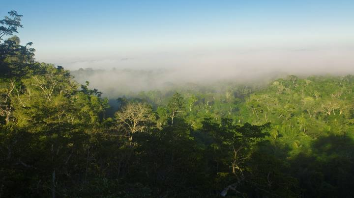 ​Amazon Rainforest Will Be Past The Point Of Recovery By 2064, Scientist Predicts
