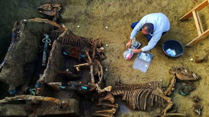 Archaeologists Unearth Fossilised Roman Chariot With Two Horses In Croatia