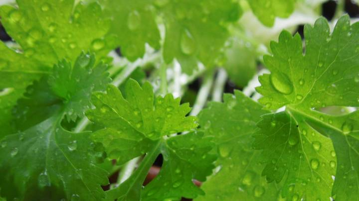 There's Facebook Page Dedicated To People Who Hate Coriander And Has Nearly 220,000 Members
