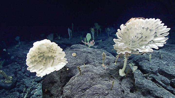 Alien Landscape Discovered 7,700ft Under The Sea By Scientists
