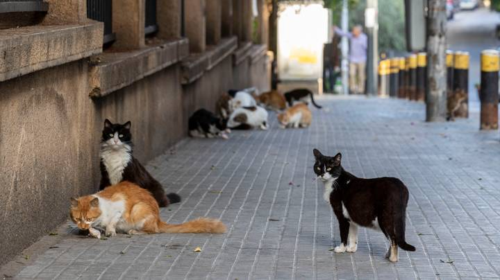 New Study Finds That Cats Can Catch Coronavirus
